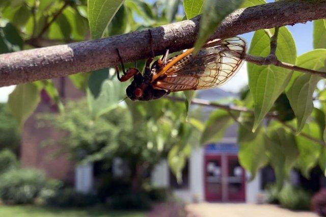 Trinity UMC Cicadas