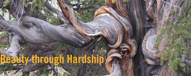 Beauty Through Hardship