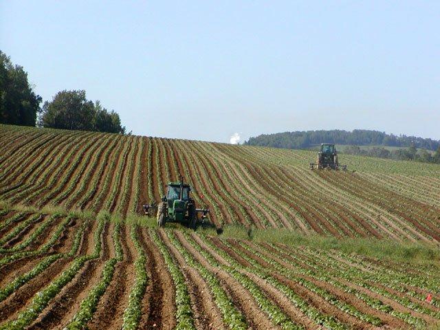 Potato Field Monoculture