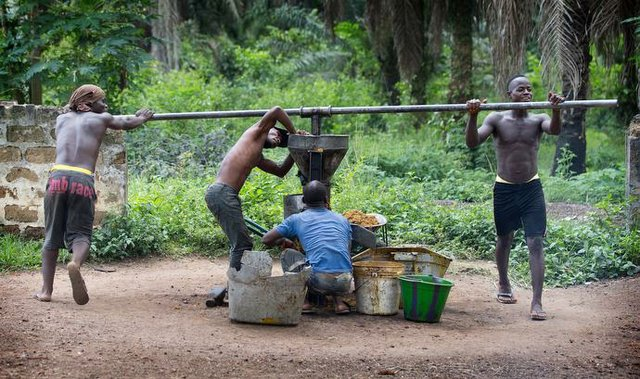 Liberia Palm Oil Workers