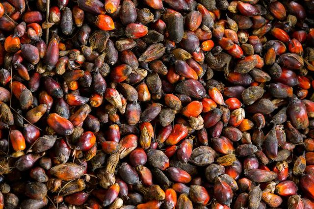 Liberia Palm Nuts