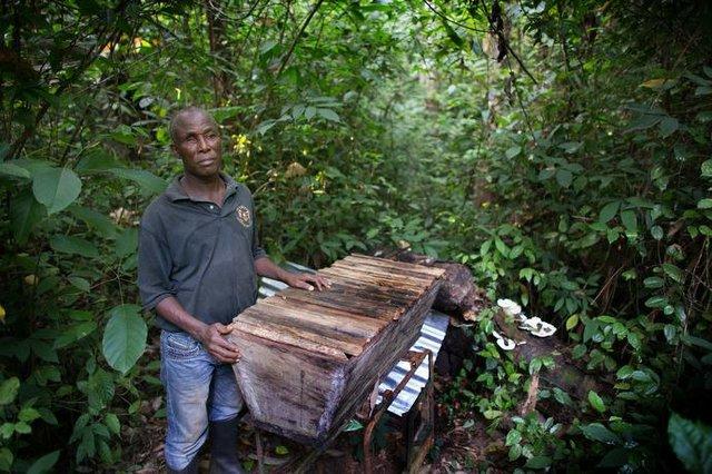 Liberia Beekeeping