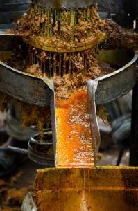 Liberia Palm Oil