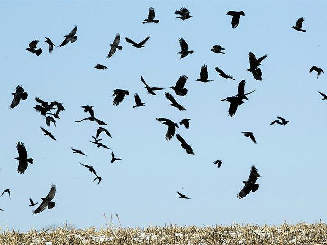 Birds Mennonite Exit