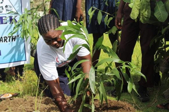 Liberia Tree Planting
