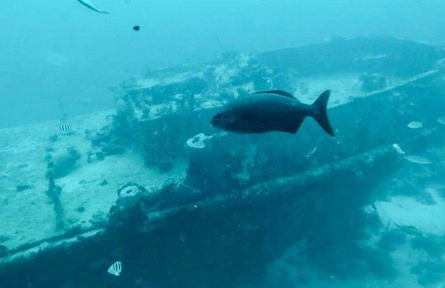 Fish and shipwreck