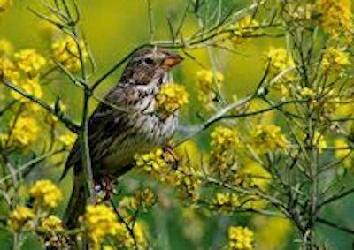 Burklo bird