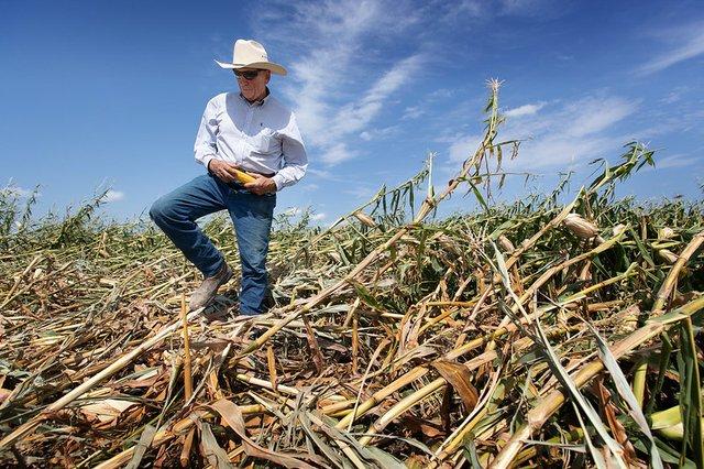 Iowa corn damage