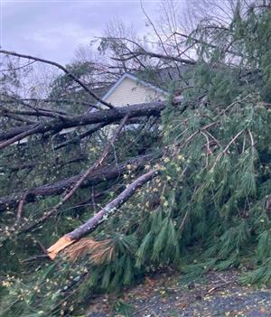 Newnan tornado tree down